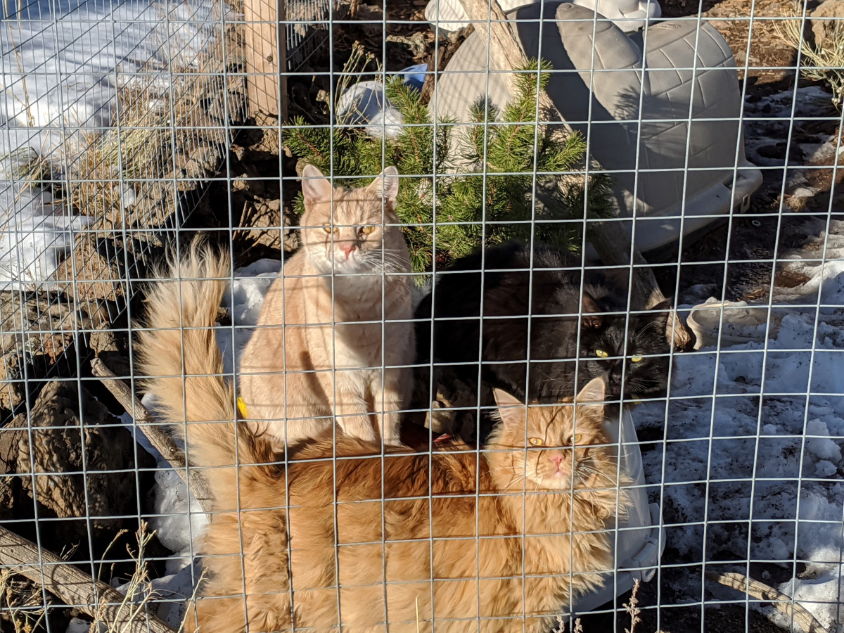 Animal Hoarding: What Happens to the Animals Once They Are Rescued?